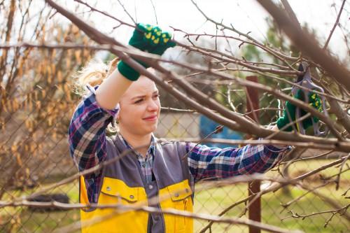 ABSAGE! Obstbaum-Schnittkurs in Theorie und Praxis am Beispiel Apfelbaum